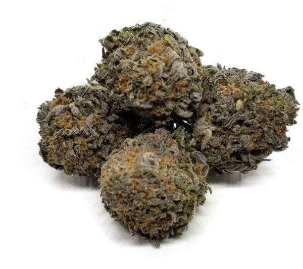 Purple Haze strain bulk