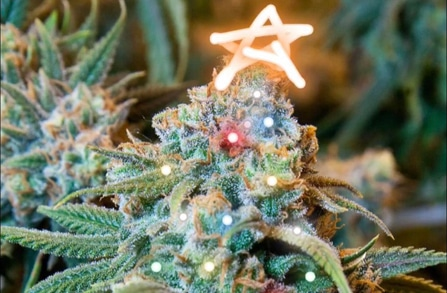 weed christmas trees and ornaments holidays featured